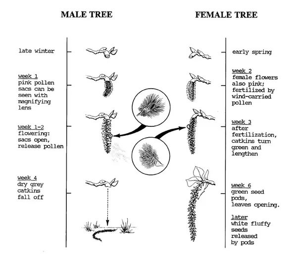 Do Plants  Trees  Fruits Have Genders Like Us  Male And