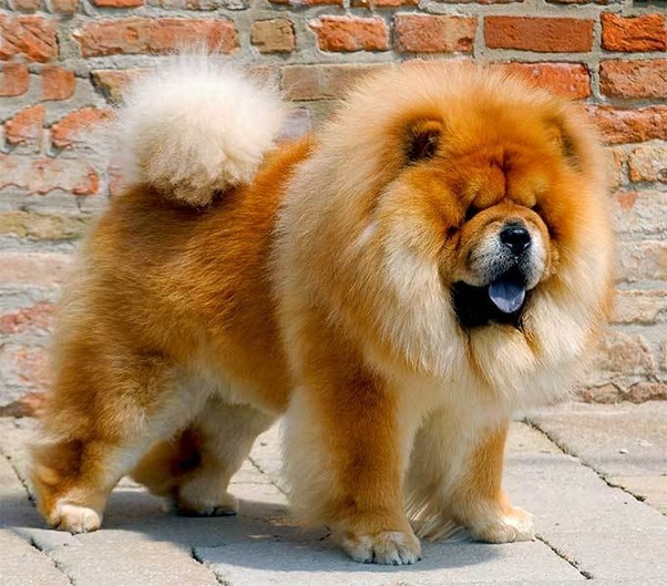 What Is The Most Expensive Dog Breed