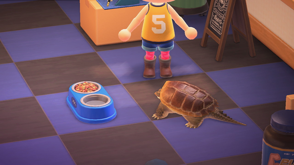 Can You Get Pets In Animal Crossing New Horizons Quora