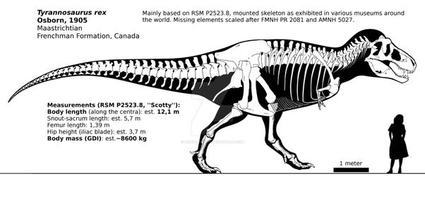 602 x 289 png 118kBVastatosaurus