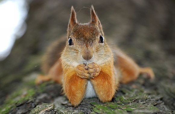 Are squirrels dangerous? - Quora