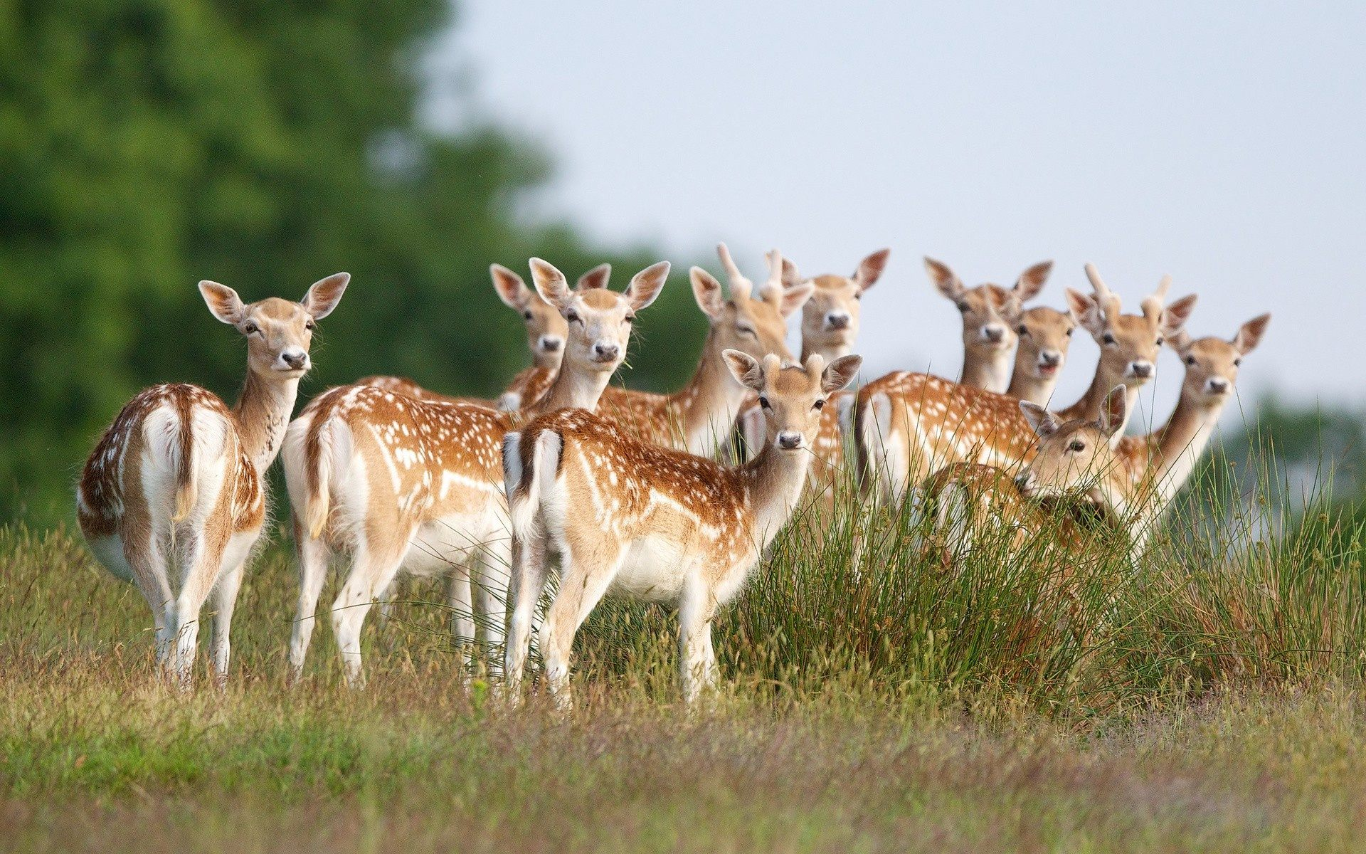 What Is A Group Of Deer Called Quora