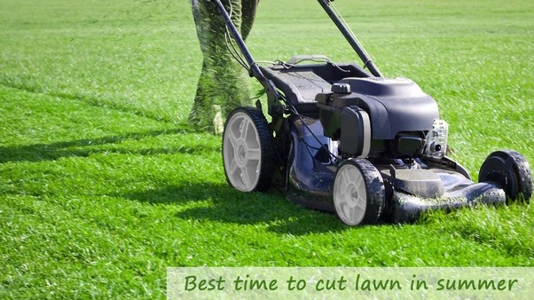 What is the best time of day to water lawns when the typical summer in this write up we have an answer for a question like what is the best time to cut your lawn in summer check out these suggestions below to find out solutioingenieria Gallery