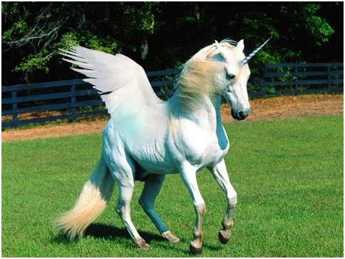 If Unicorns Were Real What Would They Eat Quora