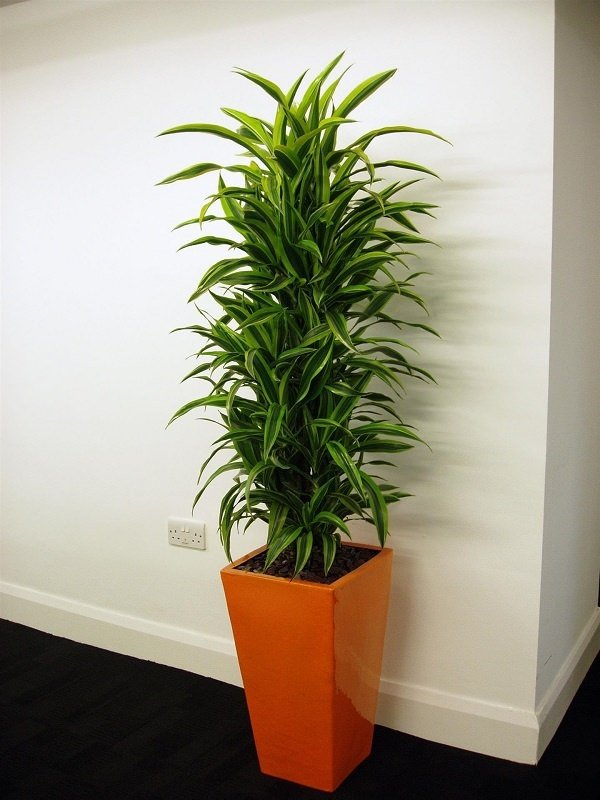 Whatu0027s The Best Plant For An Office With No Windows?   Quora