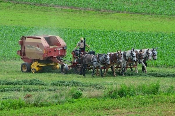 Baling Hay With Kubota : Do amish farmers use tractors quora