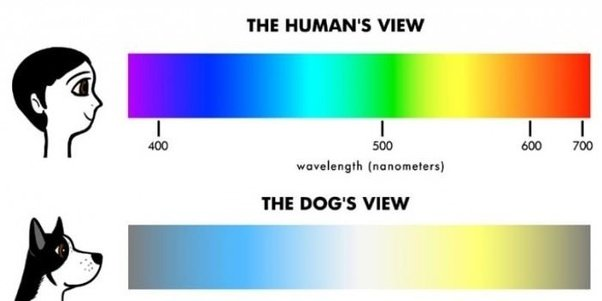 Do Cats Have Better Eyesight Than Dogs
