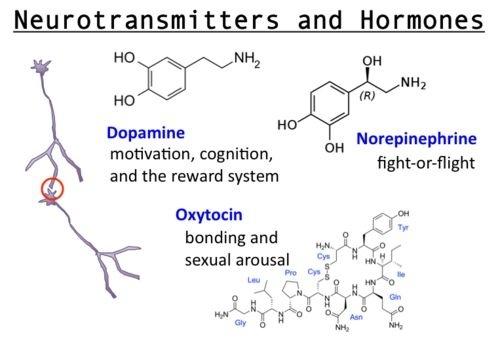 Hormones released after sex
