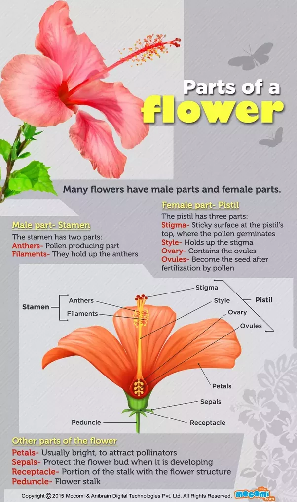 What Are The Four Main Parts Of A Flower Quora