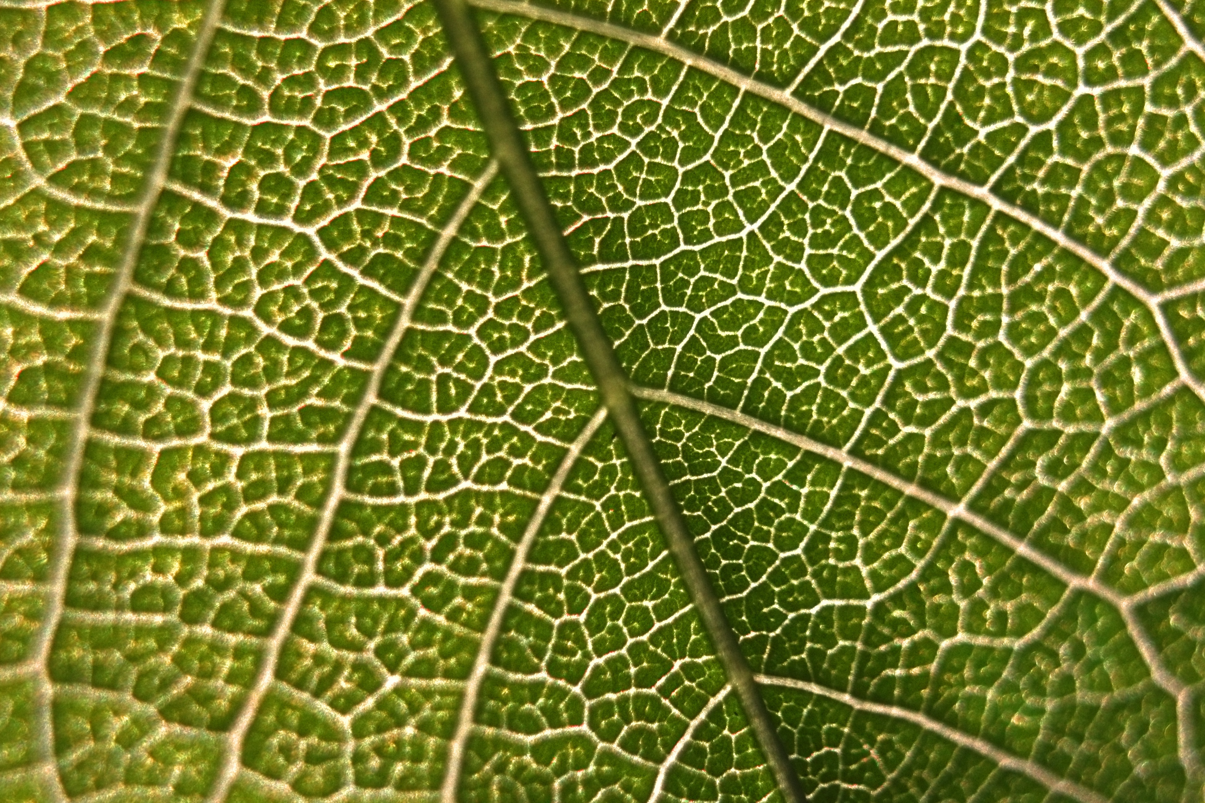 why do plants contain other pigments besides chlorophyll