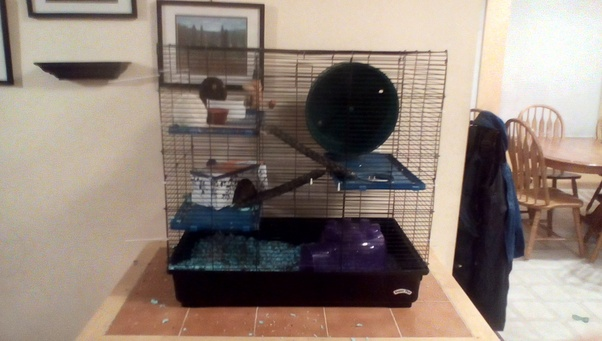 What Does Your Rats Cage Setup Look Like I Need Ideas Quora