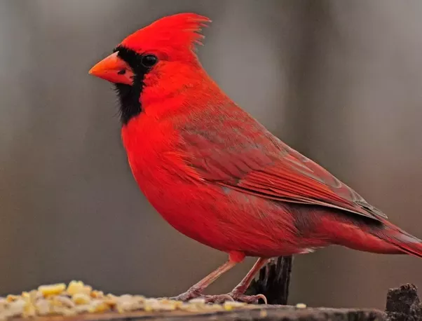 what is your state s bird quora