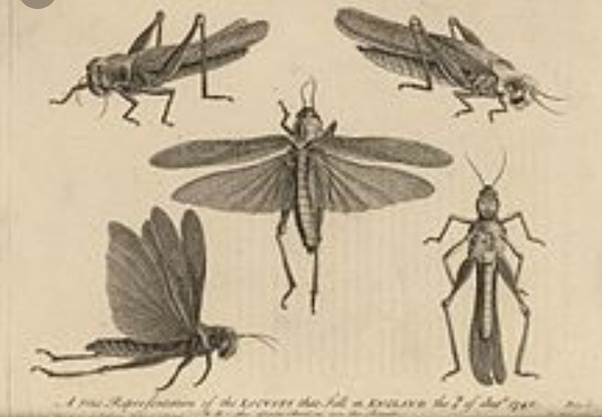 What does 'locusts' mean in the Bible? - Quora