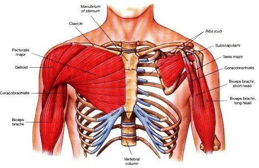Why is the chest area near my armpit hurt the next day after chest ...
