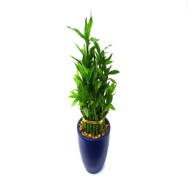 ... Zamioculcas Zamiifolian U2013 This Plant Is Probably The Most Durable Of  All. It Can Grow In Low Light; High Light And It Can Even Survive In A  Closet For ...