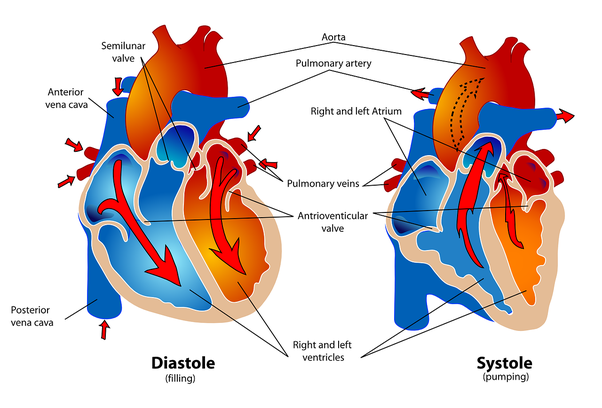 What are the best cardiac treatment hospital in bangalore? - Quora
