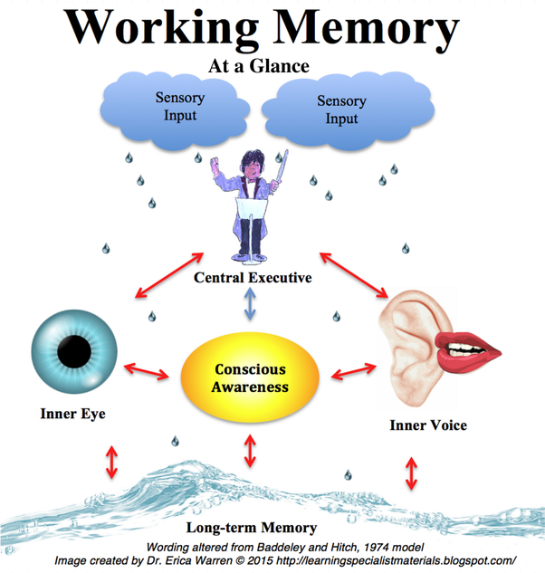 What Is The Best Practical Definition Of Working Memory You Have