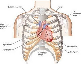 Can 9 ribs be broken by performing CPR, particularly \'the anterior ...