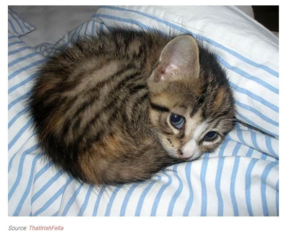 From A Scientific Perspective Why Are Humans Drawn To Cute Animals Like Puppies Or Kittens Quora