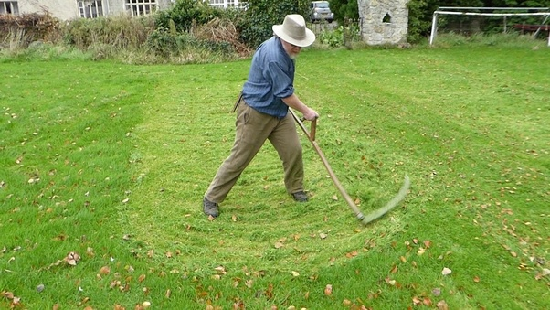How did people cut their lawns in the Medieval Times? - Quora