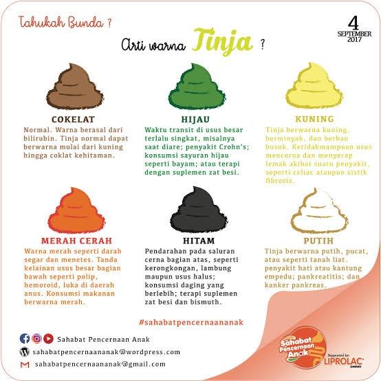 Apakah Warna Feses Dipengaruhi Oleh Makanan Yang Dikonsumsi Quora