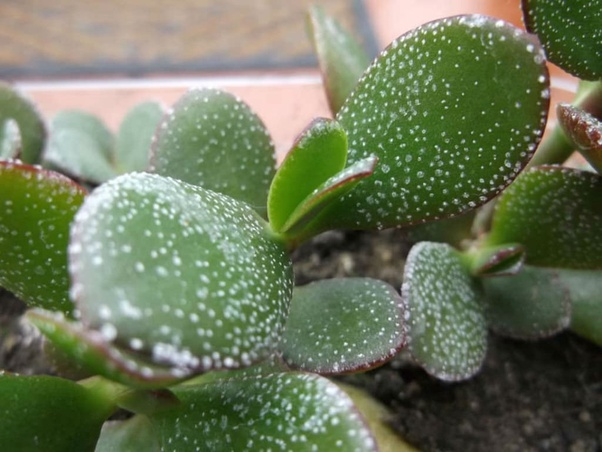 Why Do My Potted Plants Leaves Keep Getting White Spots