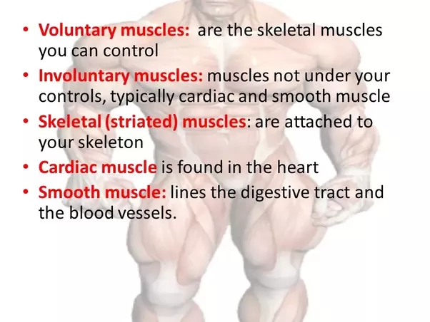 What Are Some Good Examples Of Voluntary Muscles What Are Examples