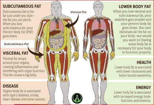 how to lose visceral body fat
