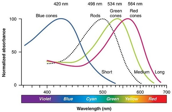 They All Have Some Spread To Them So While By Definition Cover The Visible Spectrum Their Individual And Combined Sensitivity Is Not Equal Across It