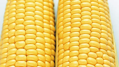Can eating a lot of corn cause constipation? Why or why not