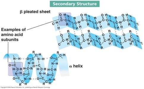 Image result for alpha helix and beta pleated sheets