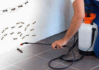 How much does pest control service cost? - Quora