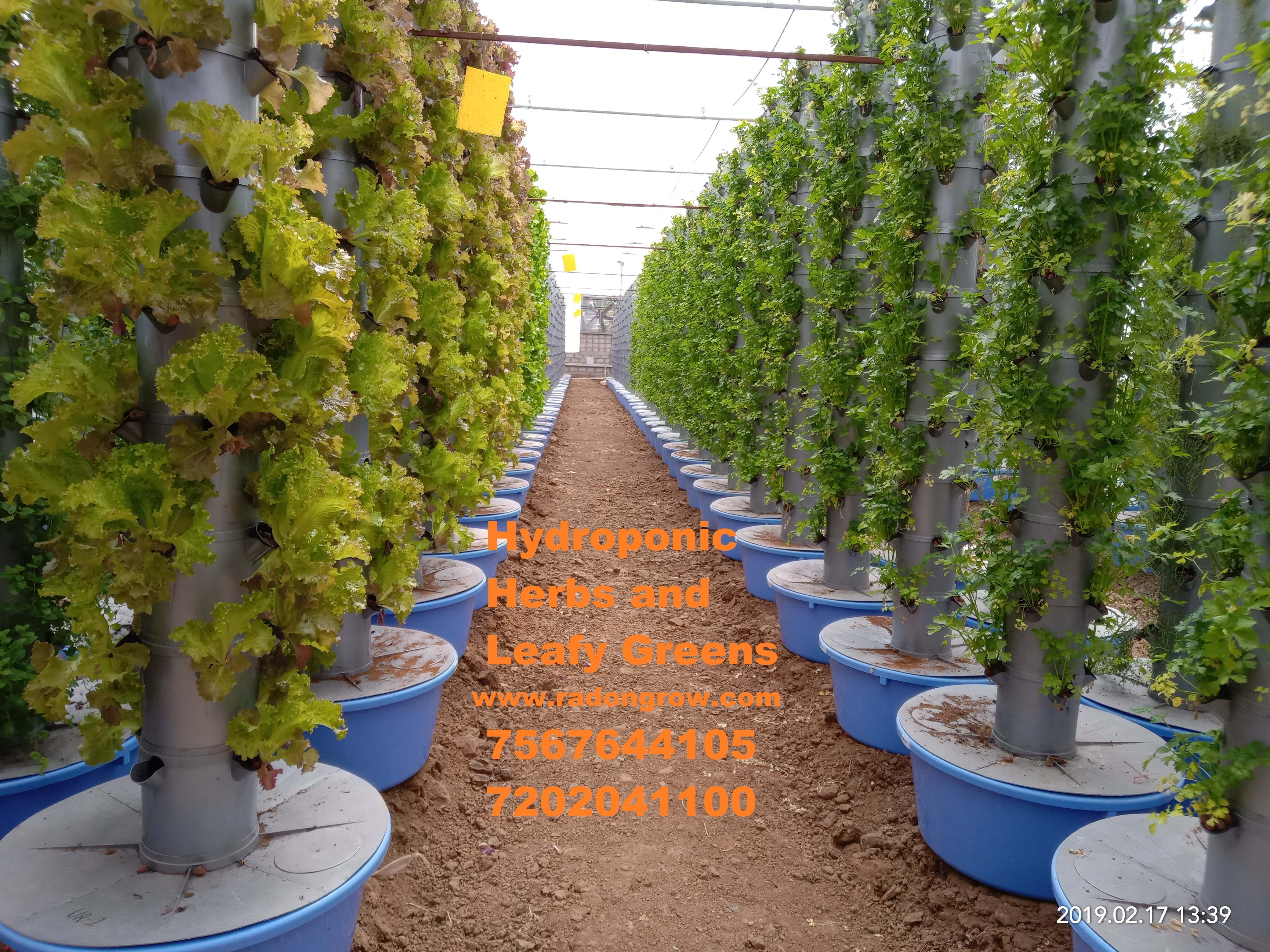 How Much Does It Cost To Make An Acre Of Hydroponic Farm In India