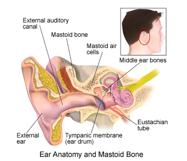 What are the precautions after ear surgery? - Quora