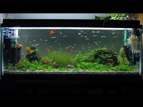 How many black skirt tetras if any can i keep in a five for 10 fish are in a tank riddle answer