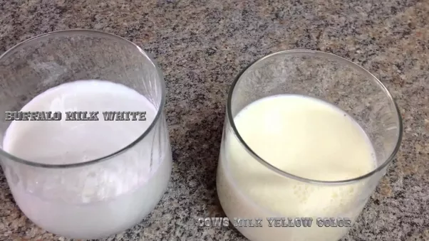 Original Milk Vs Natural Milk