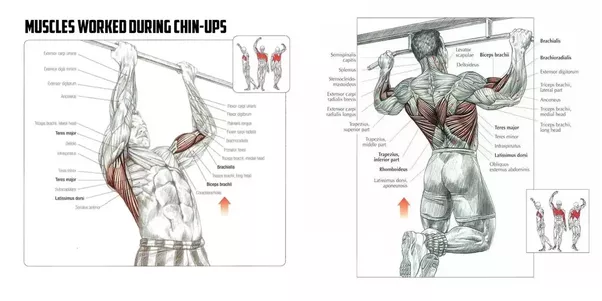 Are There Any Bicep Chest And Shoulder Workouts For The Gym On A