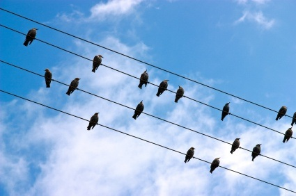Why do bats of electric shock when hanging from electric wire ... How To Wire A Bat Yourself on wire octopus, wire frog, wire hat, wire dream catcher, wire bee, wire bit, wire lizard,