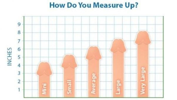 What Is The Average Size For Penis