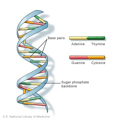 what is a dna molecule quora