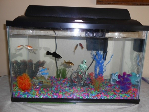 What's the difference between a 'fish tank' and an ...