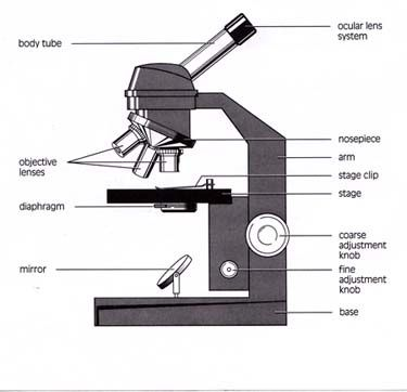 What is a way in which magnification is controlled in a microscope the oculars can also be changed out but that is a more manual and tedious proces in microscopes but it is the only option in telescopes ccuart Image collections