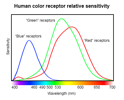 This Chart Shows That The Most Common Human Eye In Bright Light Is Sensitive To Three Different Parts Of Spectrum Relative Response