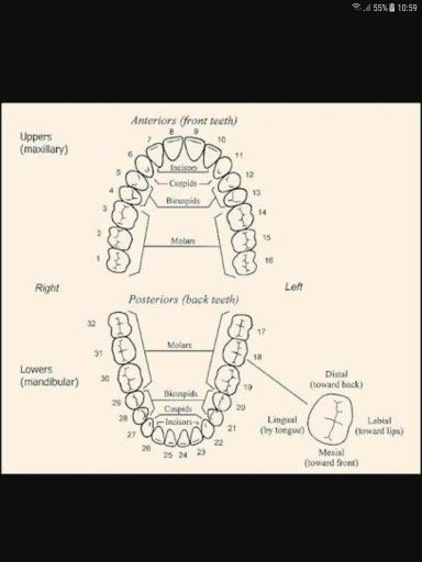 Will tooth filled cadidates get rejected from the ssb medical quora for your reference ccuart Choice Image