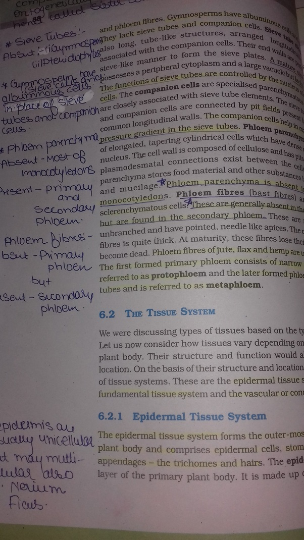 How to study the chapter anatomy in flowering plants for the NEET ...