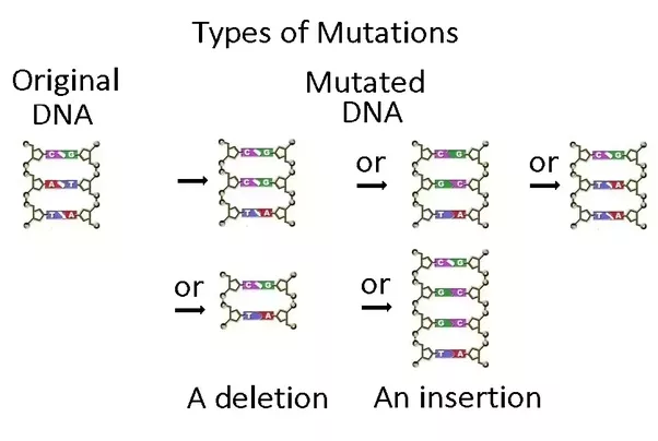 an introduction to the analysis of dna mutation An introduction to next the region of dna harboring the mutation must be sequenced at very high levels dna-protein interaction analysis (chip.