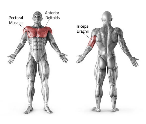 Does trying bench press set help increase shoulder ... Overhead Press Muscles Worked