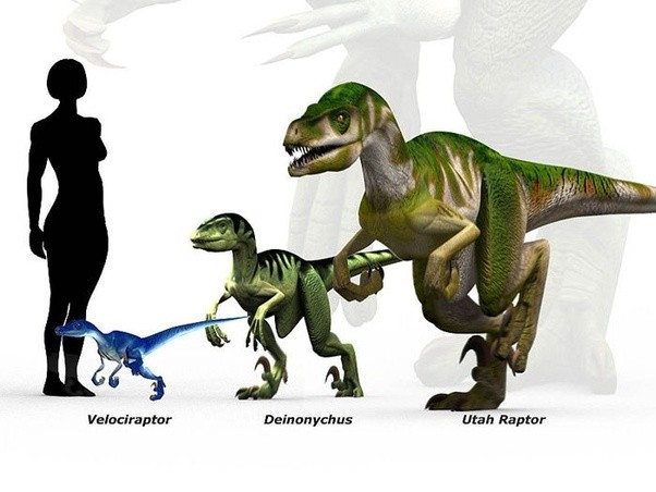 How smart were velociraptors quora - Raptor dinosaure ...