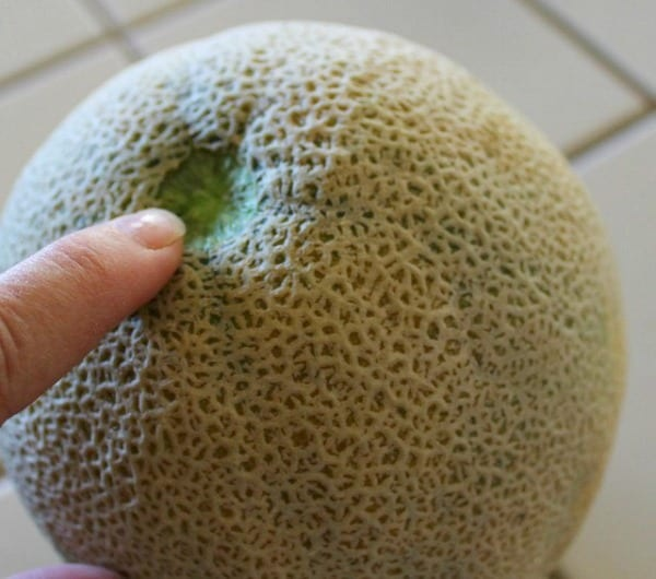 If You Want To Determine If A Cantaloupe Is Ripe Before You Cut It Open Do You Flick It With Your Finger Shake It Or Knock Your Melons Together Quora Cantaloupe melons have a fairly soft exterior skin that can be easily punctured and penetrated. a cantaloupe is ripe before you cut