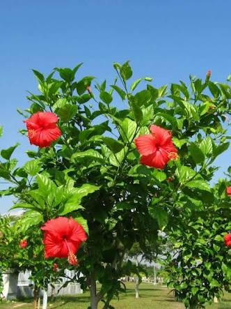 What Are The Names Of Three Shrubs Quora